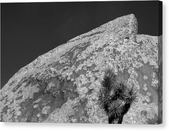 Joshua Tree Textures Canvas Print by Peter Tellone