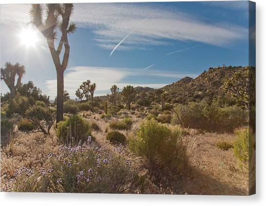 Joshua Tree Using A Tripod Canvas Print