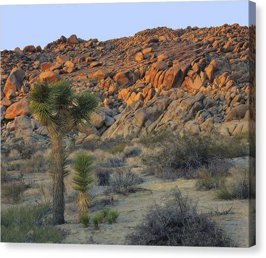 Joshua Tree With Offsrping Canvas Print