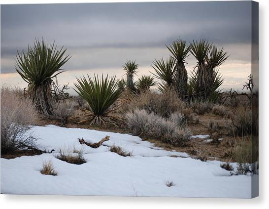 Joshua Trees And Snow Canvas Print by Pamela Schreckengost