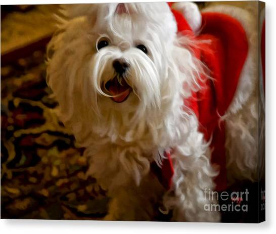 White Maltese Canvas Print - Joy To The World by Lois Bryan