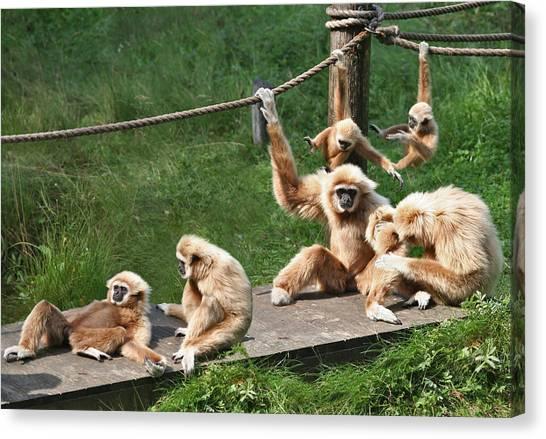 Joyful Monkey Family Canvas Print