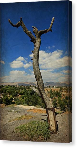 Byzantine Canvas Print - Judas Tree -- Jesus Christ Superstar  by Stephen Stookey