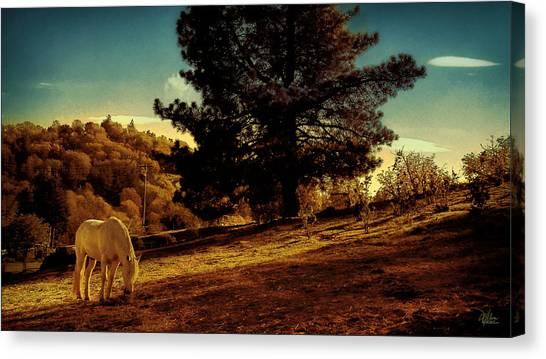Springtime California Landscape Canvas Print