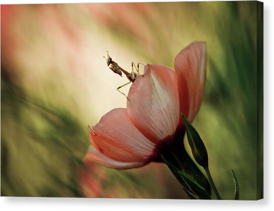 Bug Canvas Print - Juliet On The Balcony by Fabien Bravin