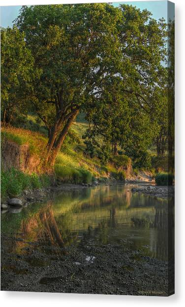 July Morning Along The Creek Canvas Print