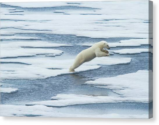 Polar Bear Canvas Print - Jump! by Vadim Balakin