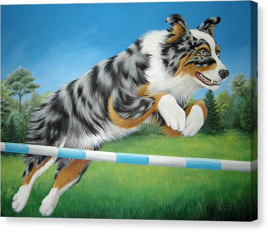 Jumping Aussie Canvas Print