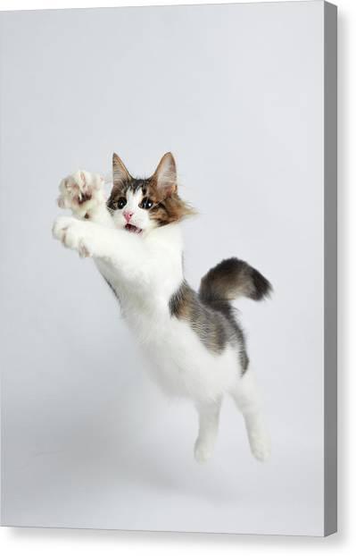 Jumping Kitten Canvas Print by Ryuichi Miyazaki