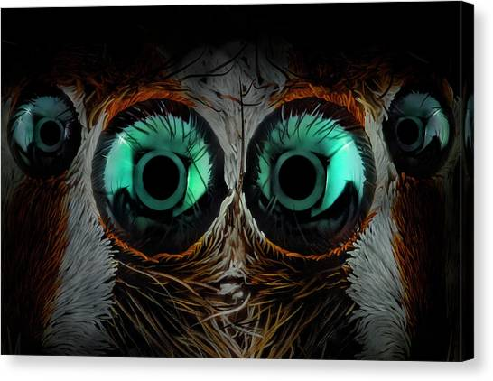 Spiders Canvas Print - Jumping Spider Eyes by Javier Rup?rez