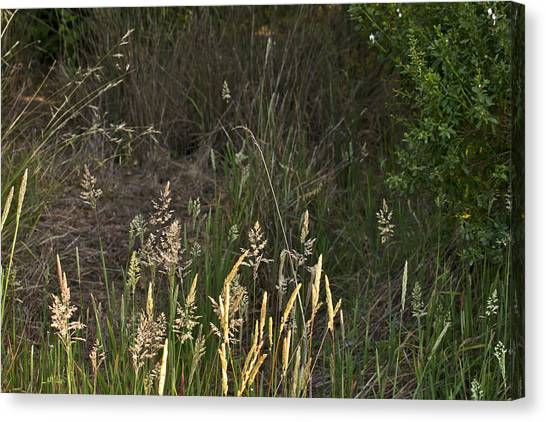 June Grass Canvas Print by Larry Darnell