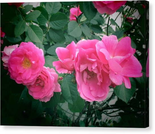 June Rose II Canvas Print