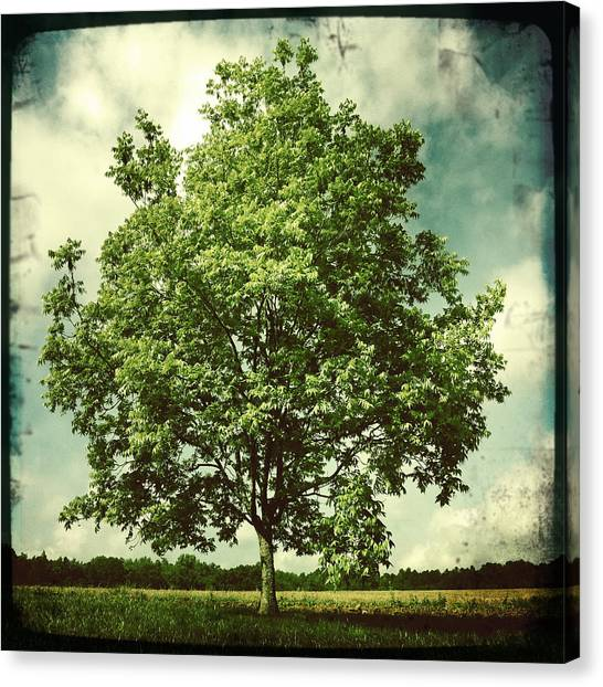 Tree Canvas Print - June by Sarah Coppola
