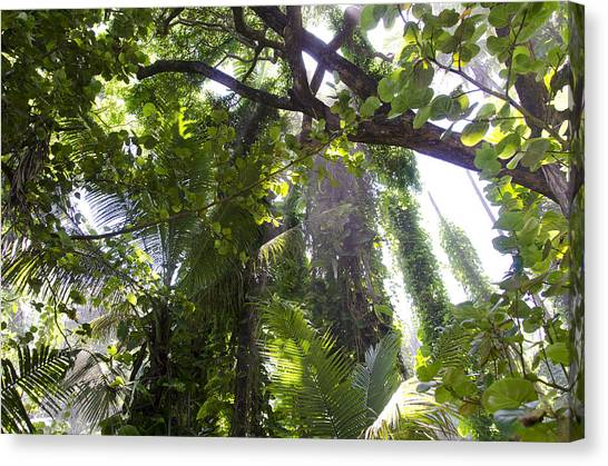 Jungle Canopy Canvas Print