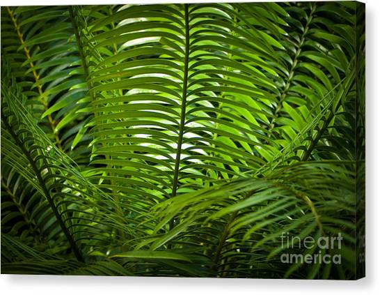 Jungle Fern Canvas Print