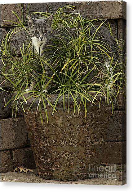 Jungle Kitty All Profits Go To Hospice Of The Calumet Area Canvas Print