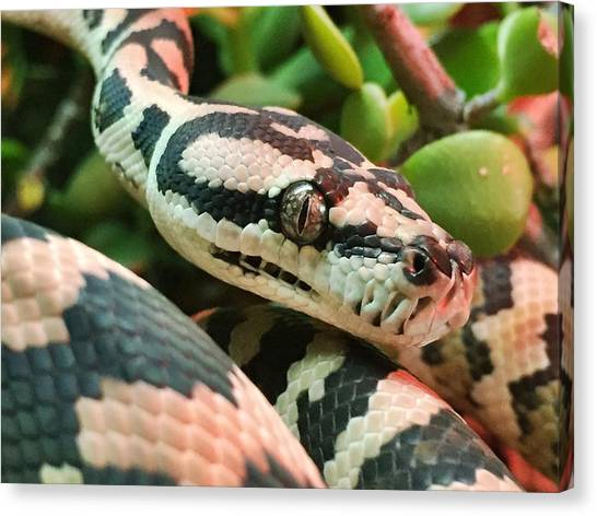Pythons Canvas Print - Jungle Python by Kelly Jade King