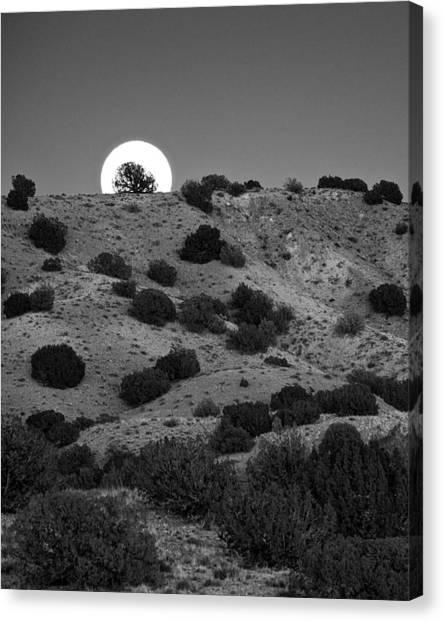 Juniper At Moonrise Canvas Print