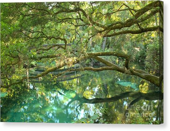 ocala national forest canvas print   juniper springs fern hammock by adam jewell ocala national forest art   fine art america  rh   fineartamerica
