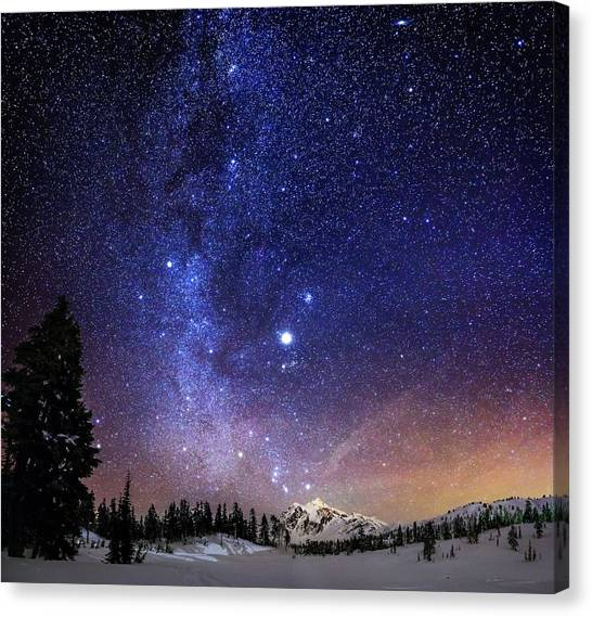 Pine Trees Canvas Print - Jupiter Rising by Alexis Birkill