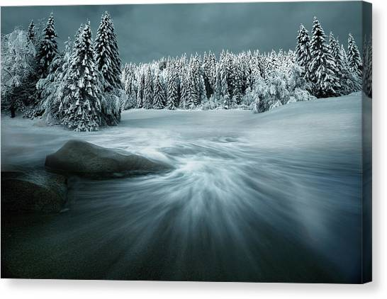 Pine Trees Canvas Print - Just A Dream by Arnaud Maupetit