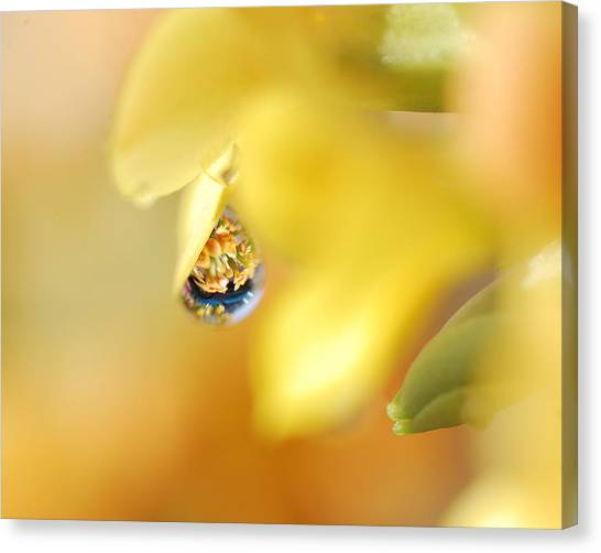 Just A Drop Of Spring Canvas Print
