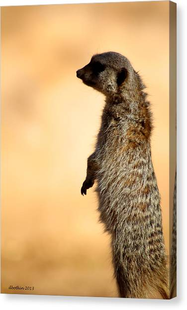 Just A Meerkat Canvas Print by Dick Botkin