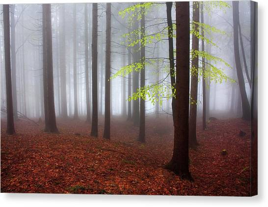 Foggy Forests Canvas Print - Just Awakened by Kristjan Rems