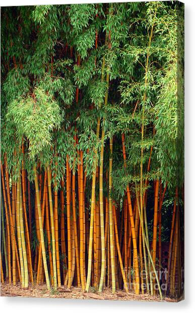 Just Bamboo Canvas Print