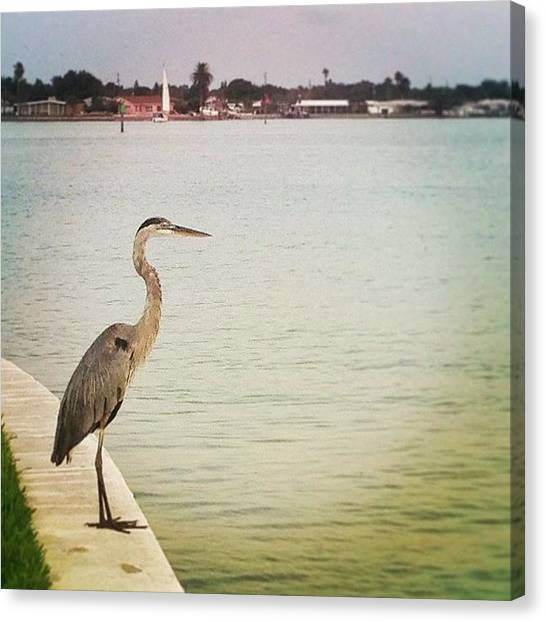 Herons Canvas Print - Just Can't Leave Well Enough Alone by Jayna Wallace