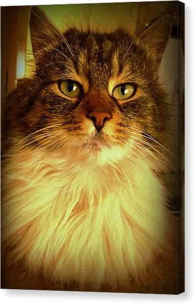 Just Cat Canvas Print