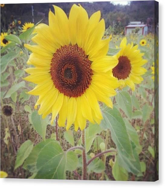 Backpacks Canvas Print - Just Like Sunflower, Always Head by Janicew Shum