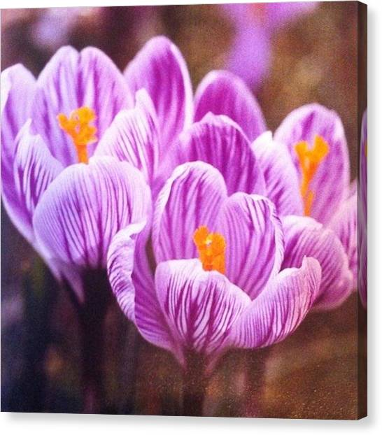 Florals Canvas Print - Just Look How The Orange Yellow Pops by Portraits By NC
