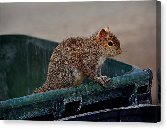 Just Looking For My Nuts Canvas Print