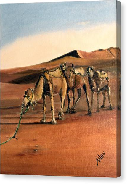 Just Us Camels Canvas Print