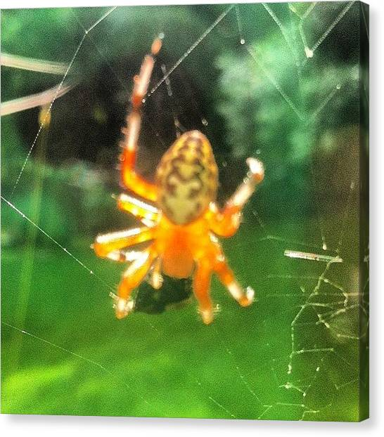 Spider Web Canvas Print - Just Watched This #cute Ass #spider by Cassandra Leigh
