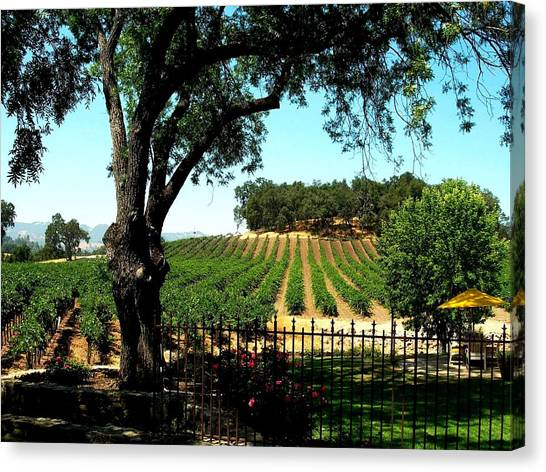 Justin Vineyards Paso Robles California Wine Country Winery Canvas Print by Ron Bartels