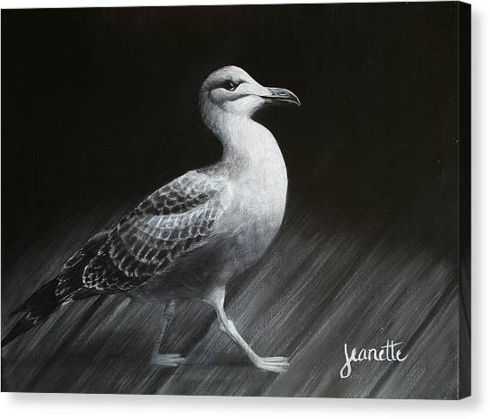 Juvenile Gull Canvas Print