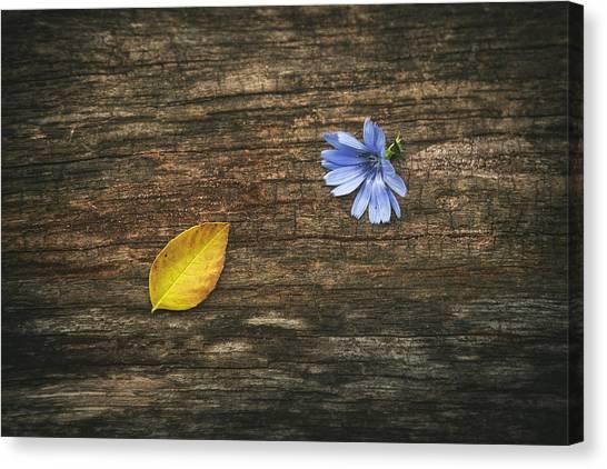 Log Canvas Print - Juxtaposition by Scott Norris