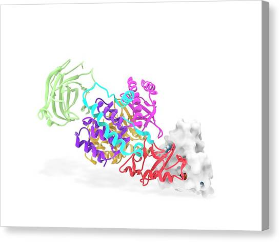 Biochemical Canvas Print - K-ras Pi3k Complex by Ramon Andrade 3dciencia