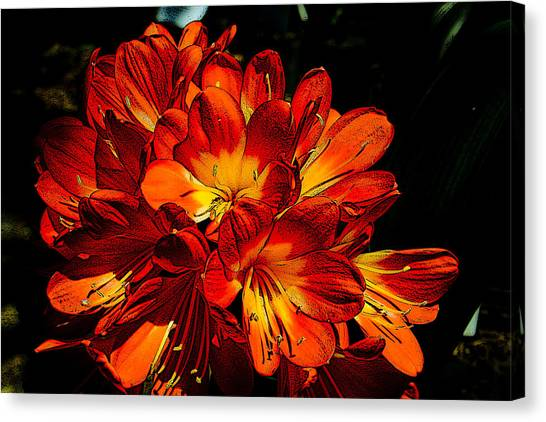 Kafir Lily Too Canvas Print