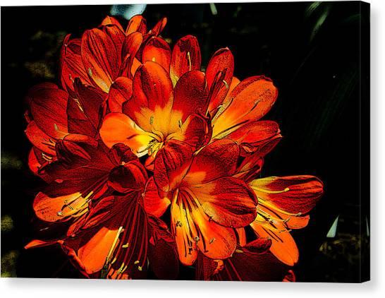 Kafir Lily Too Canvas Print