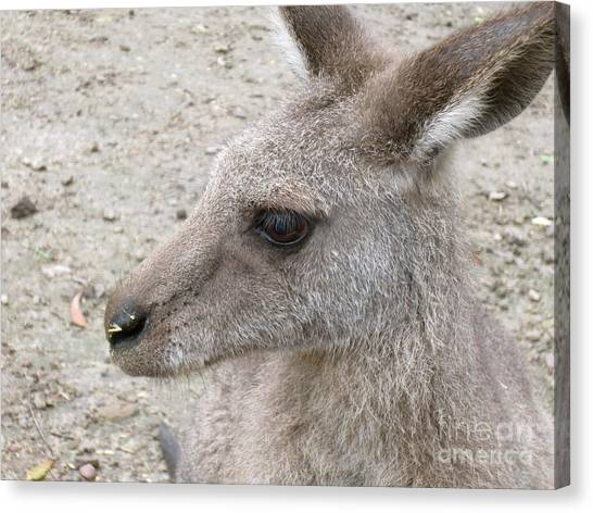 Daintree Rainforest Canvas Print - Kanga Close-up by Annie Fell Photography
