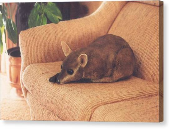 Kangaroo Buddy Sculpture Canvas Print by Arlene Delahenty