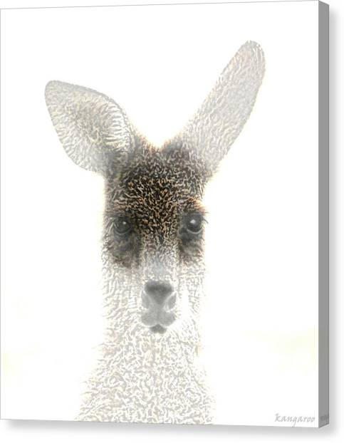 Kangaroo Canvas Print - Kangaroo by Holly Kempe