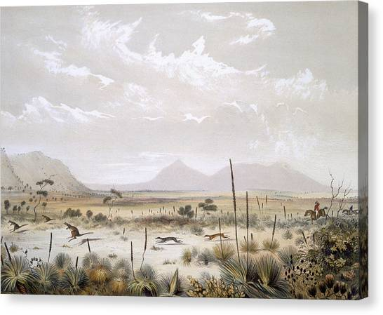 Immigration Canvas Print - Kangaroo Hunting Near Port Lincoln by George French Angas