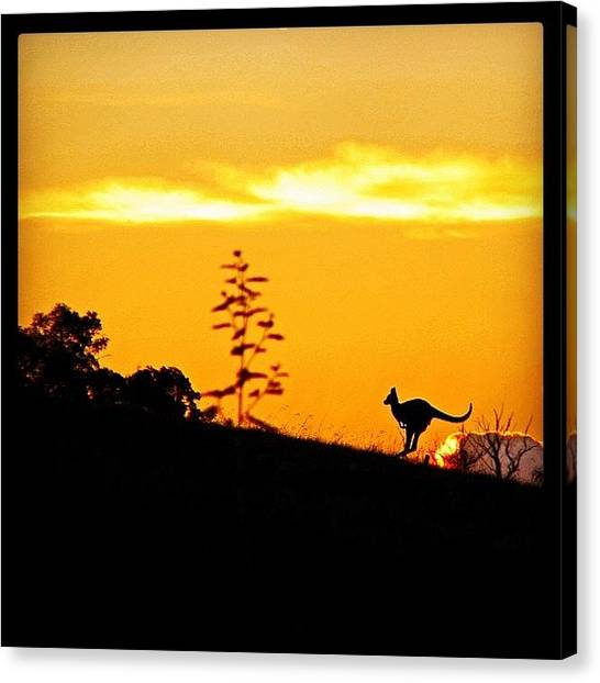 Kangaroo Canvas Print - Kangaroo Silhouette At Sunrise by James McCartney