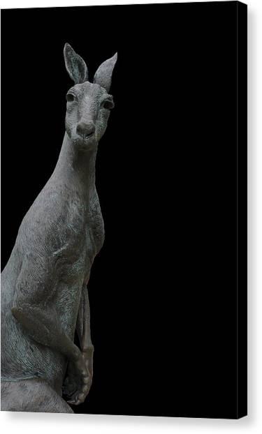 Kangaroo Smith On Black Canvas Print by Gregory Smith