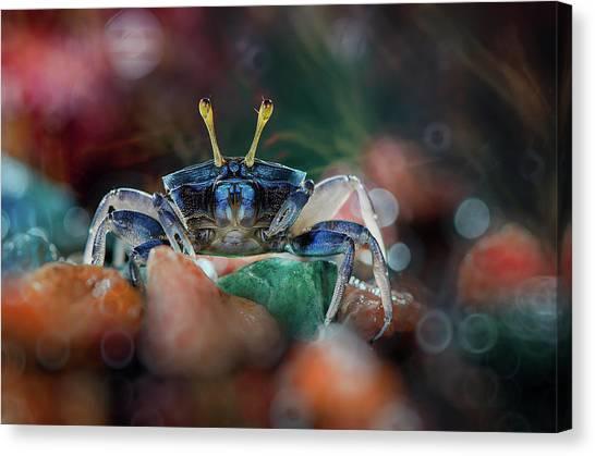 Crabs Canvas Print - Kapiting Kacui by Ahmad Baihaki