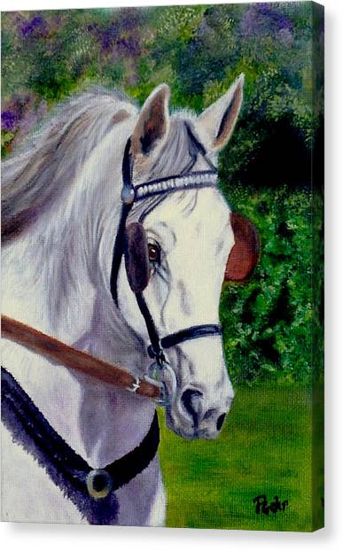 Katies Bailey Canvas Print